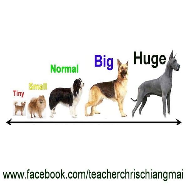 Big ใหญ่ / Small เล็ก