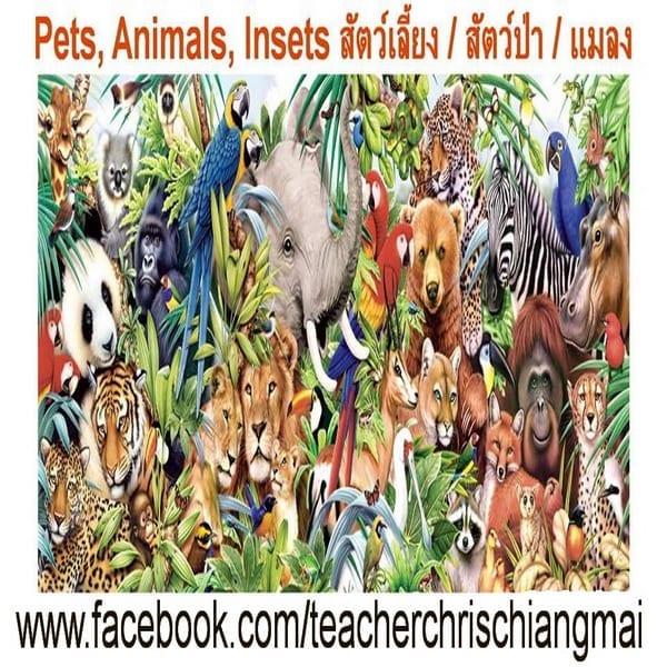 Animals birds insects สัตว์ นก แมลง